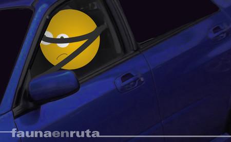 fauna en ruta - Cómo ponerse el cinturón de seguridad
