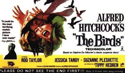 Alfred Hitchcock: 'Los pájaros', el terror de lo cotidiano