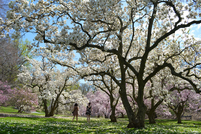 Jardín Botánico Nueva York primavera