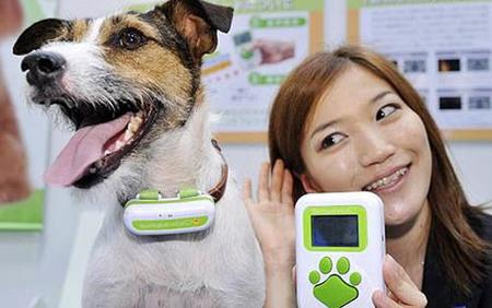Un traductor de ladridos, lo último para tu perro