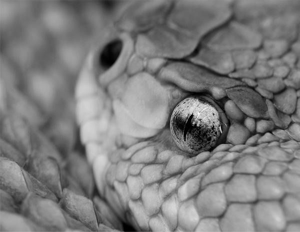 Foto de La belleza animal en Blanco y Negro (6/12)