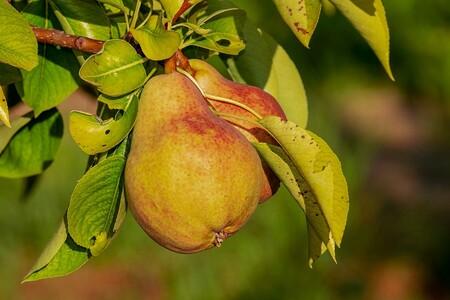 Que Fruta De Temporada Hay En Octubre Y Como Aprovecharla Pera