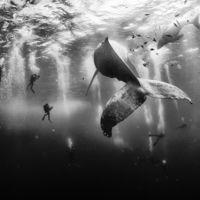 Los 10 ganadores del concurso de National Geographic nos traen lo mejor de nuestro planeta