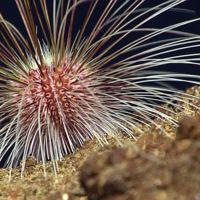 Viaje a la fosa oceánica más profunda del planeta con imágenes sorprendentes