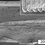 La impresión 3D podría ser más barata y sostenible gracias a la celulosa vegetal, dicen en el MIT