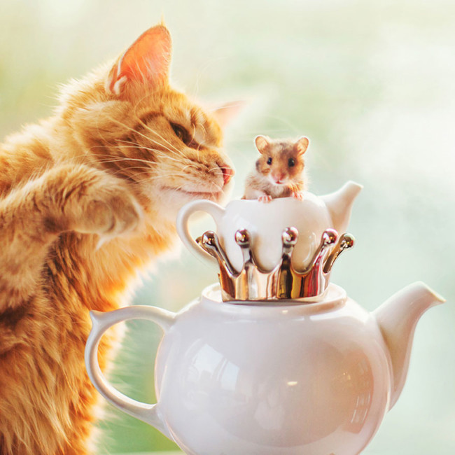 Ginger Cat Photography Kotleta Cutlet Kristina Makeeva Hobopeeba 3