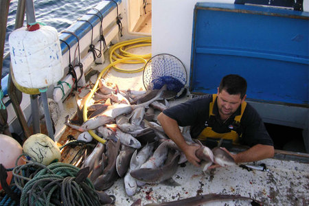 pesca historia sushi