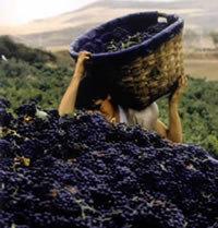 Pesoz abrirá su Museo del Vino