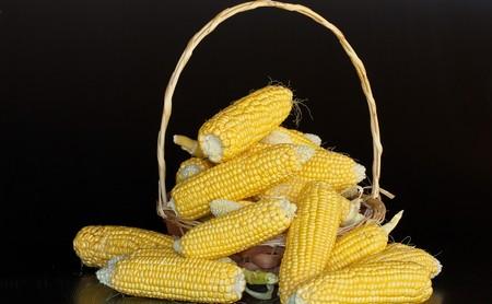"""Con """"un ritual"""" en el Senado se presentó iniciativa para proteger al maíz nativo de los transgénicos en México"""