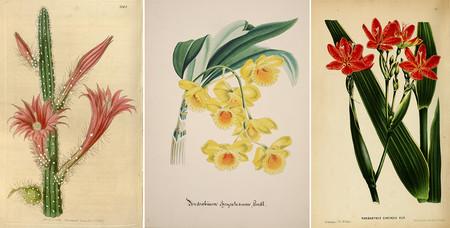Flores Ilustraciones Retro Vintage Antiguas Descarga Gratis