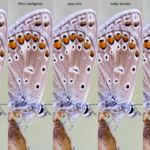 4 métodos de enfoque anteriores a la impresión
