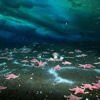Descubren la primera fuga activa de metano en la Antártida, su evolución es diferente a las del resto del planeta