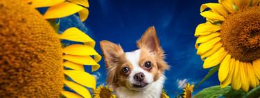 Perros retratados como supermodelos en las tiernas y divertidas fotos de Kaylee Greer (Dog Breath Photography)