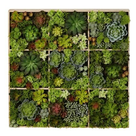 Decoracion De Pared Con Plantas