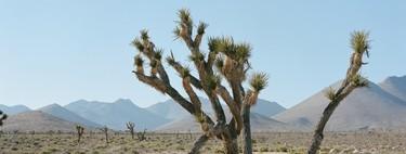 Death Valley (California) registra 54,4 °C, de confirmarse será el récord de temperatura más alta registrada jamás en el planeta