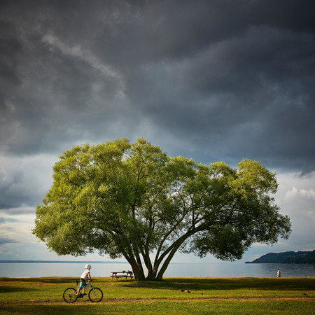 árbol brócoli