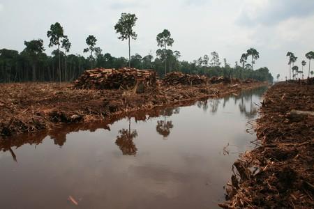 El biodiésel nació para reducir las emisiones de CO2. Está haciendo exactamente lo contrario