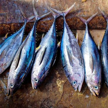 Empieza la temporada del atún: te proponemos cinco recetas para disfrutar este sabroso pescado