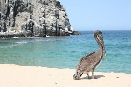 Pelican 2439133 1280