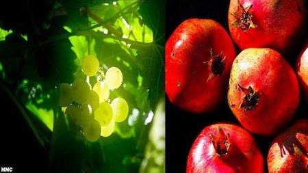 Deliciosas frutas de otoño