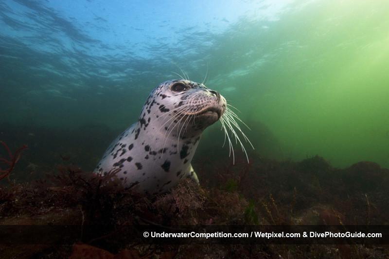 Foto de Underwater competition (23/34)