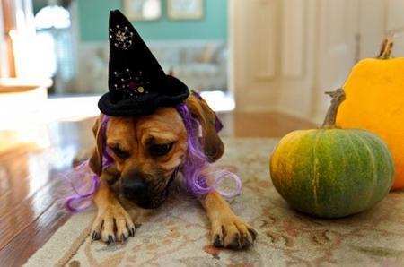 Fiesta de Halloween solidaria con los animales