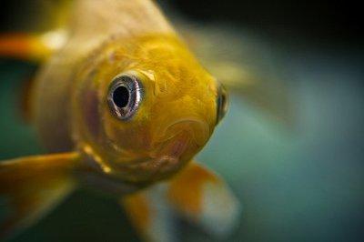 La pedicura con peces llega a España