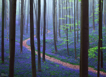 Beautiful Mysterious Forests 8 880