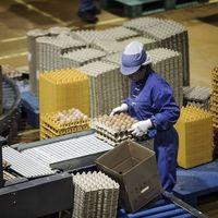 Las gallinas tienen unas niñeras muy especiales en las granjas de producción china: robots