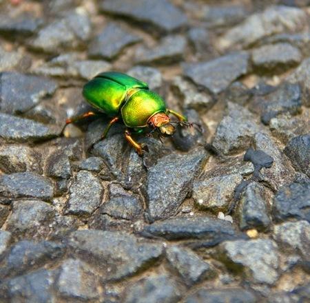 fotografias-de-insectos-32.jpg