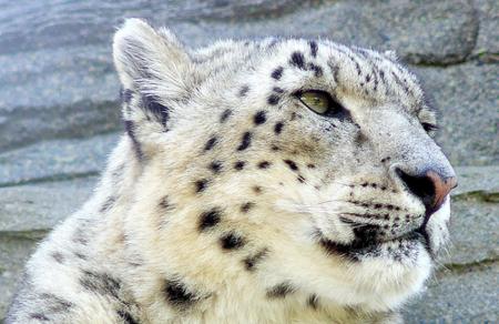Snow Leopard: Aún más mejoras y algunas novedades