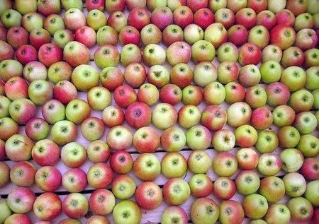 Museos de la manzana en el mundo