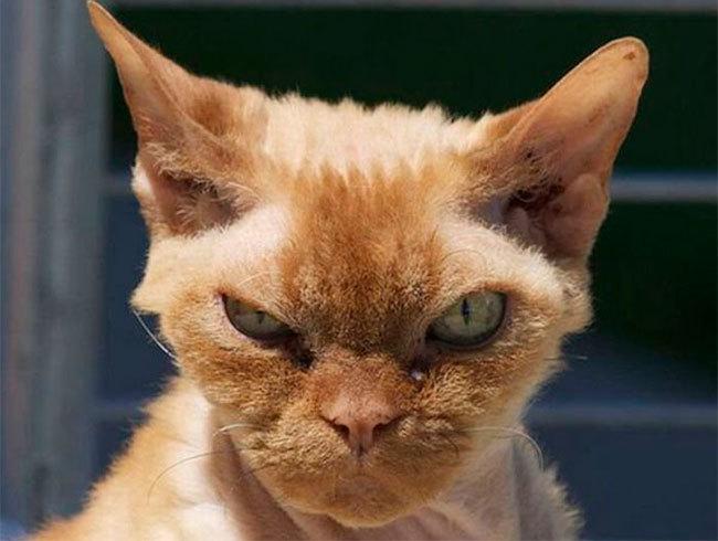 Gato mosqueado