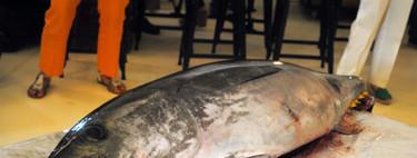 El ronqueo del atún rojo, un arte milenario japonés
