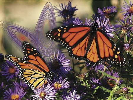 Efecto mariposa y atractores (I)
