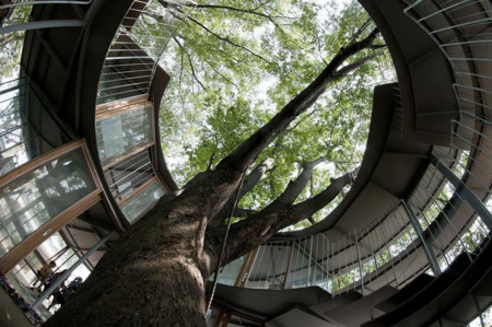 Kindergarten Around Tree Zelkova Fuji Tezuka Architects 33