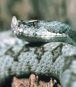 Serpientes, víctimas del asfalto