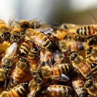 El Brexit es más peligroso de lo que crees... para las abejas