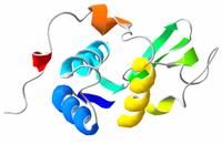 Lisozima, un aditivo alimentario