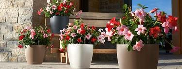 Sistemas de riego sencillos para irte de vacaciones sin arruinar tus plantas