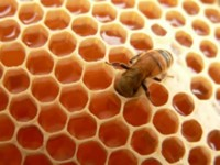 Miel: un buen antioxidante para los deportistas