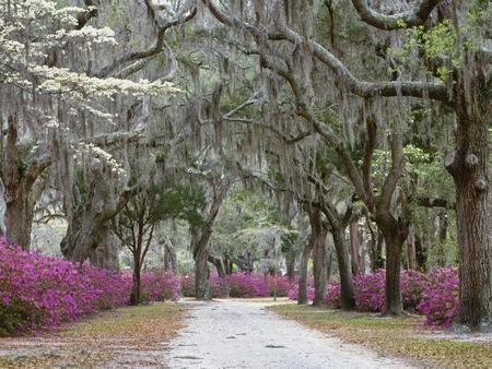 Springtime In Savannah Georgia