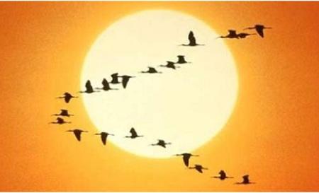 Celebre el Día de las aves con las actividades gratuitas en los centros de educación ambiental de la Comunidad de Madrid