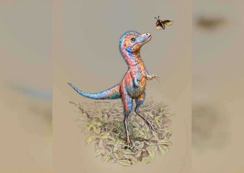 Se encuentran por primera vez restos embrionarios de dinosaurios carnívoros como un T. rex