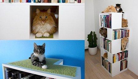 The CatCase: libros y gatos, una unión perfecta