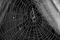 Singularidades extraordinarias de animales ordinarios (V): la araña