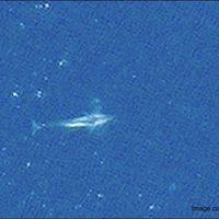 Este es el primer animal observable en detalle desde el espacio