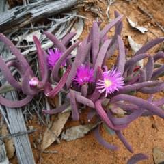 Foto 18 de 22 de la galería colores-del-gran-desierto-de-victoria en Xataka Ciencia