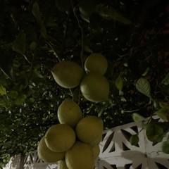 Foto 9 de 23 de la galería iphone-11-modo-noche en Xataka