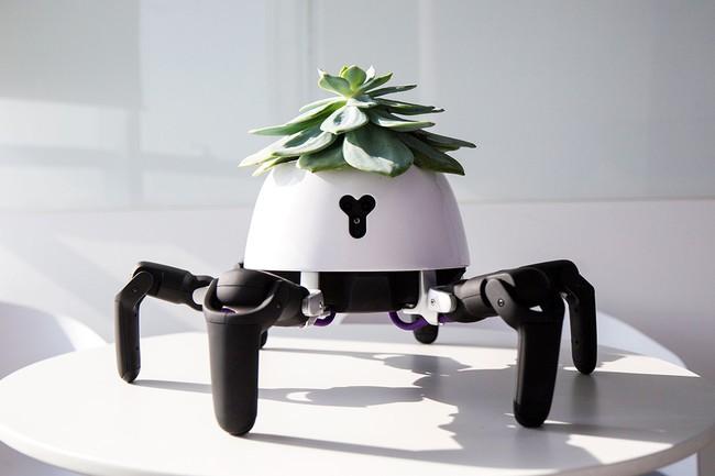 Robot Maceta